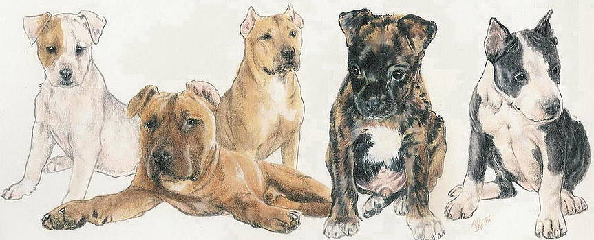 Barbara Keith - American Staffordshire Terrier Puppies