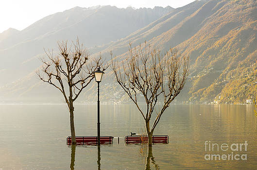 Benches and trees by Mats Silvan
