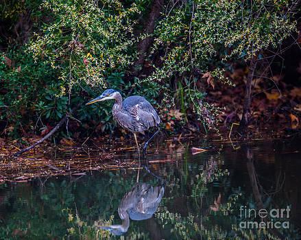 Dale Powell - Saltwater Blue Heron