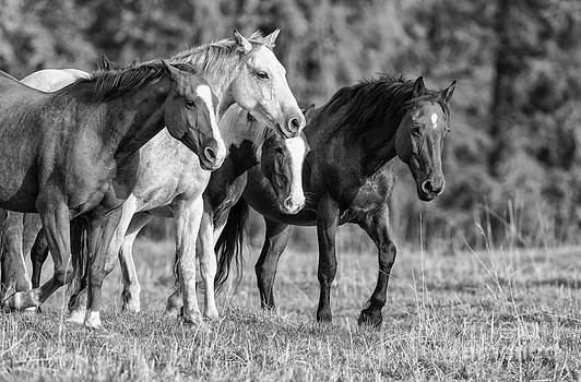 4 Brothers by Danny  Nestor