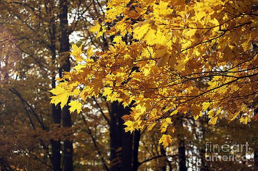 Elaine Mikkelstrup - Fall Yellow