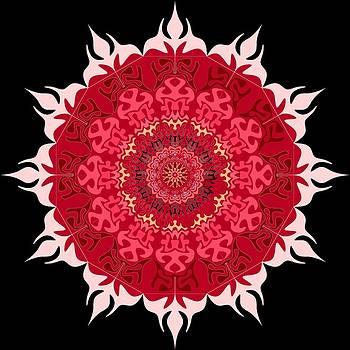 Flower by Moshfegh Rakhsha