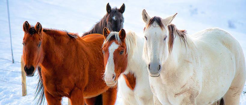 John McArthur - 4 Horses