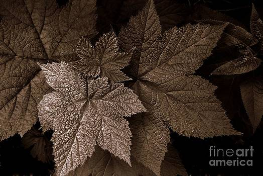 Leaves by Steve Patton