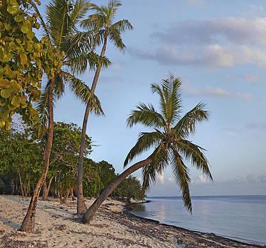 Palmetto Bay in Honduras by Tim Fitzharris