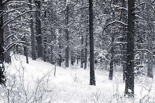 Steve Krull - Winter in Pike National Forest