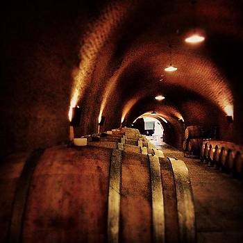 Barrels of Wine by Danielle Godfrey