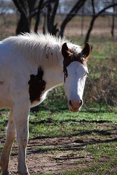 Paint Filly by Thea Wolff
