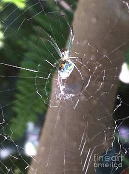 Arachnophobia by Tina Beal