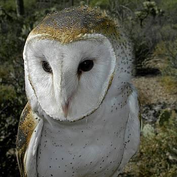 Barn Owl by Kike Calvo