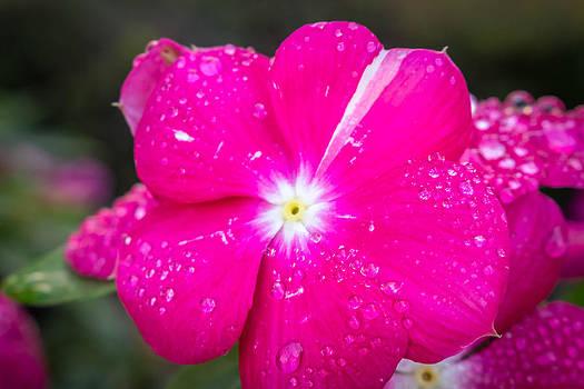 Flower by Samir Chokshi