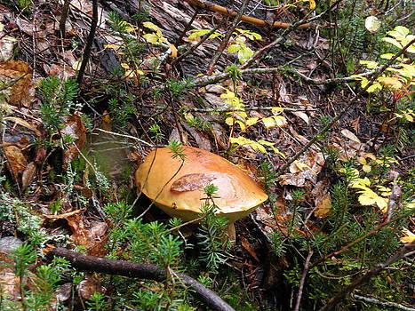 Mushroom by Charles Vana