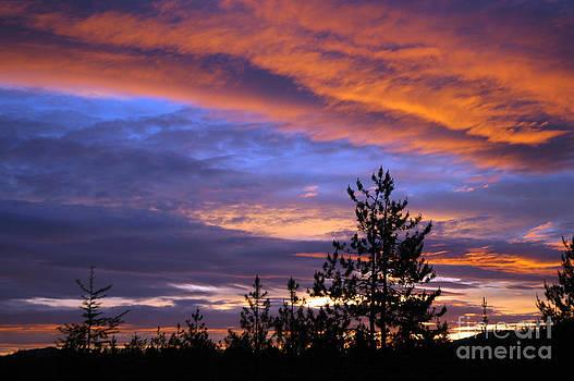 NightVisions - 730P Sunset