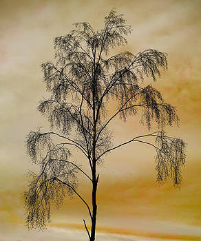 David Pringle - Tree Skeleton