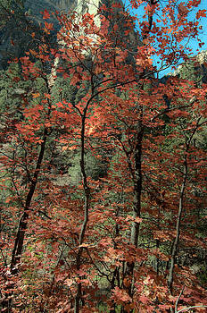 Tam Ryan - West Fork Fall Color