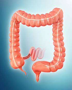 Large Intestine by Pixologicstudio