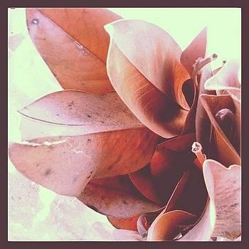 Instagram Photo by Marigan O'Malley-Posada