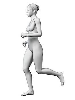 Anatomy Of Runner by Sebastian Kaulitzki