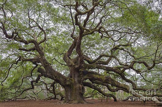 Dale Powell - SC Angel Oak Tree
