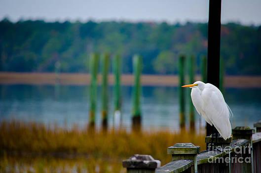Dale Powell - Egret