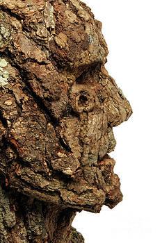 Adam Long - Revered   A natural portrait bust sculpture by Adam Long