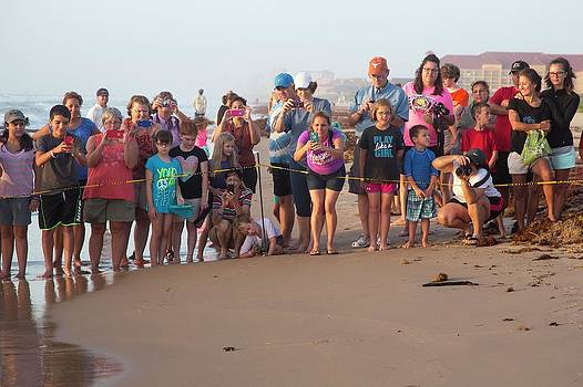 Sea Turtles Conservation by Jim West