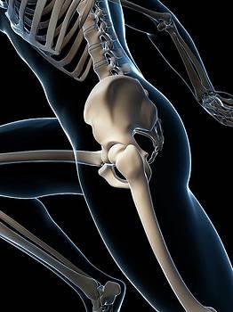 Skeletal System Of Runner by Sebastian Kaulitzki