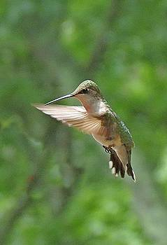 6703 Hovering hummingbird by J D  Whaley