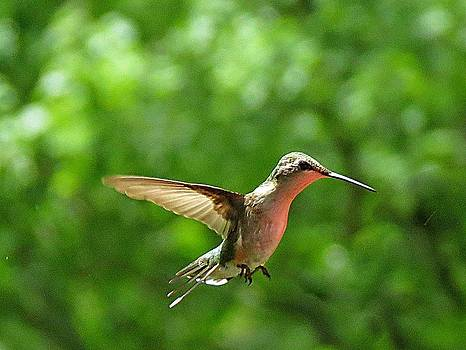 6760 Hummingbird by J D  Whaley