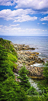 Elena Elisseeva - Atlantic coast in Newfoundland