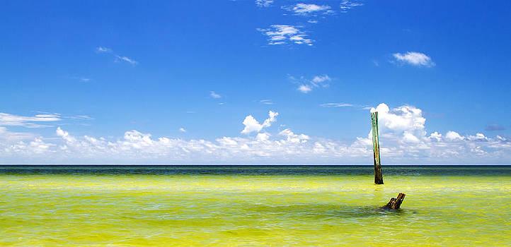 Fizzy Image - Boca Grande Florida