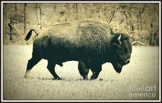 Buffalo  by Mickey Harkins