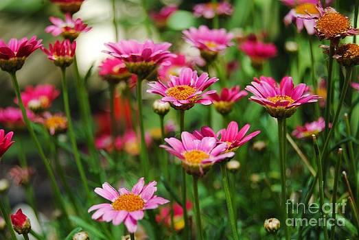 Flower by Bobby Mandal
