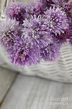 Mythja  Photography - Fresh chives flower