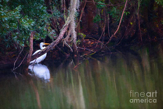 Dale Powell - Great White Heron at Waters Edge