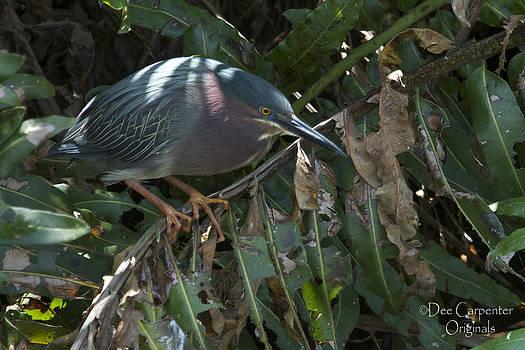 Dee Carpenter - Green Heron