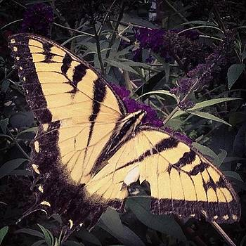 Instagram Photo by Subhash Limaye