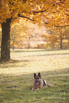 Colors of Autumn by Monika Wisniewska