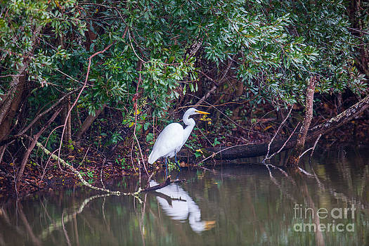 Dale Powell - Great White Heron Pond Reflection