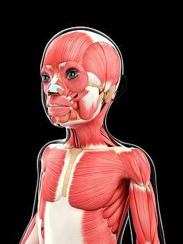 Muscular System by Pixologicstudio