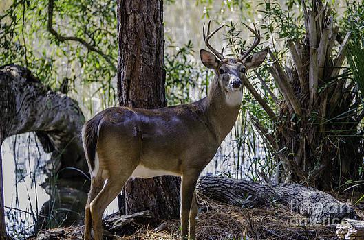 Dale Powell - 8 Point Buck in my Backyard