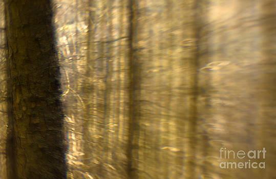 Angel  Tarantella - Tales of the forest