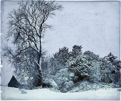 Angel Ciesniarska - wintery landscape