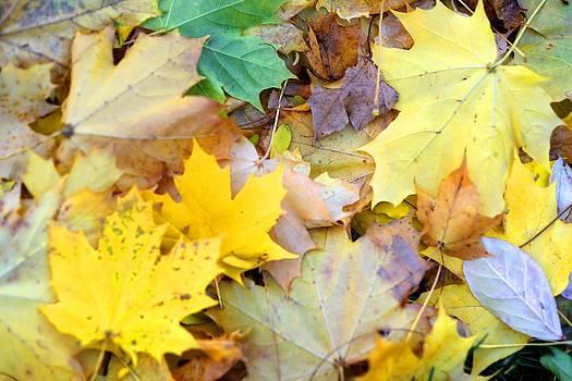 Autumn Fall Leaves by Patrick  Warneka