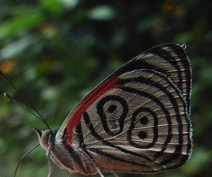 Sarah Pemberton - 88 Butterfly