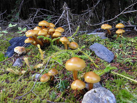 Mushrooms by Charles Vana