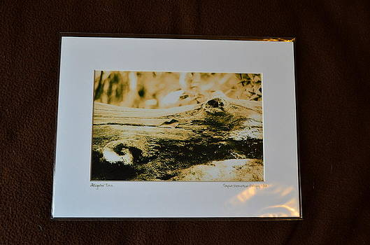 9x12 Matted - Alligator Tree by Becky Anders