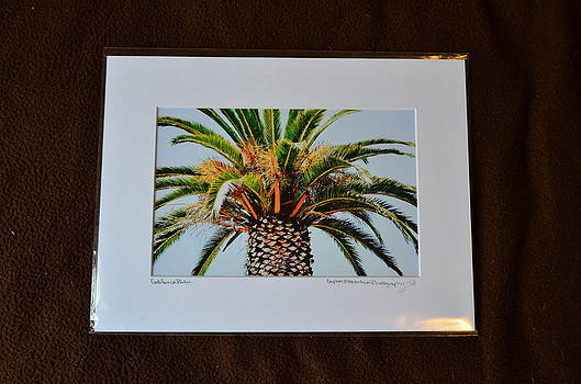 9x12 Matted - California Palm by Becky Anders