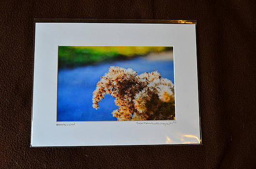 9x12 Matted - Mountain Weed by Becky Anders