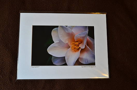 9x12 Matted - Pink Camellia 1 by Becky Anders